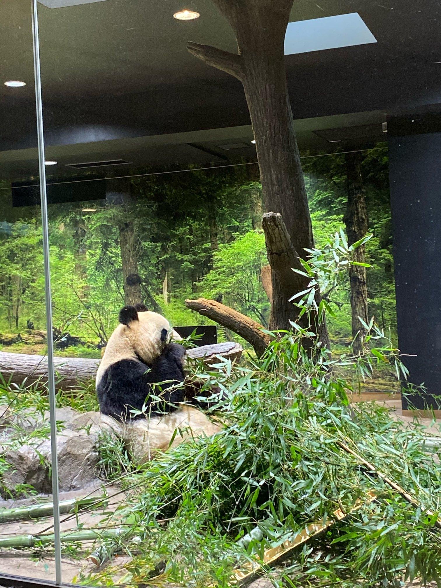 【上野動物園】シャンシャンが帰国する前に!!_1_2-2