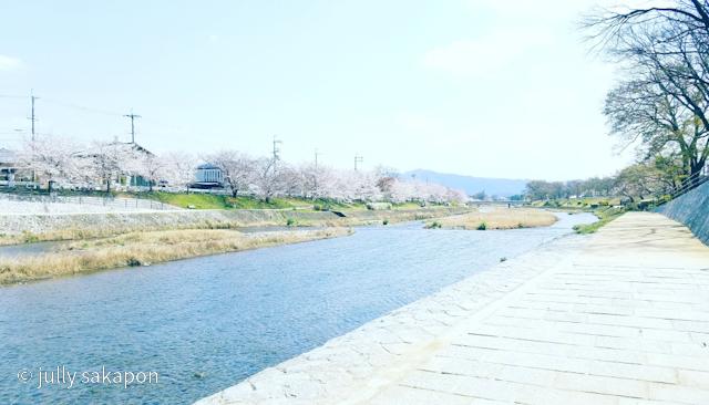 【番外編】古都 京都 鴨川を巡る桜旅 2021.3_1_1