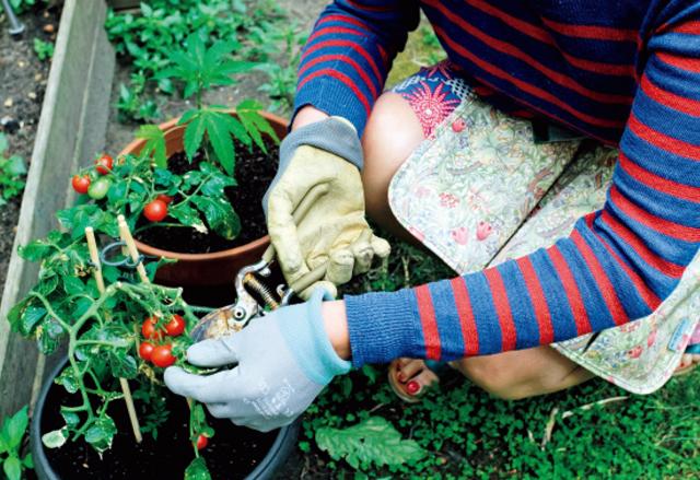 ❺中庭の菜園コーナーではミニトマトやミント、セージなどのハーブ類を収穫。