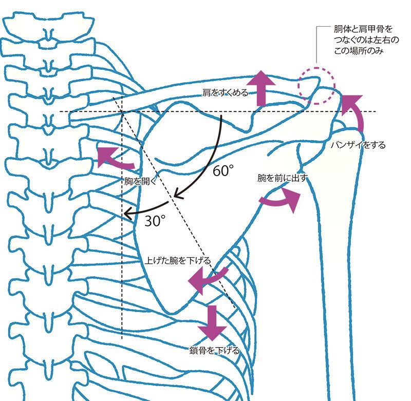 そろそろ、肩甲骨はがし!肩こりや痛みを改善するなら肩甲骨ケアがマスト_1_4