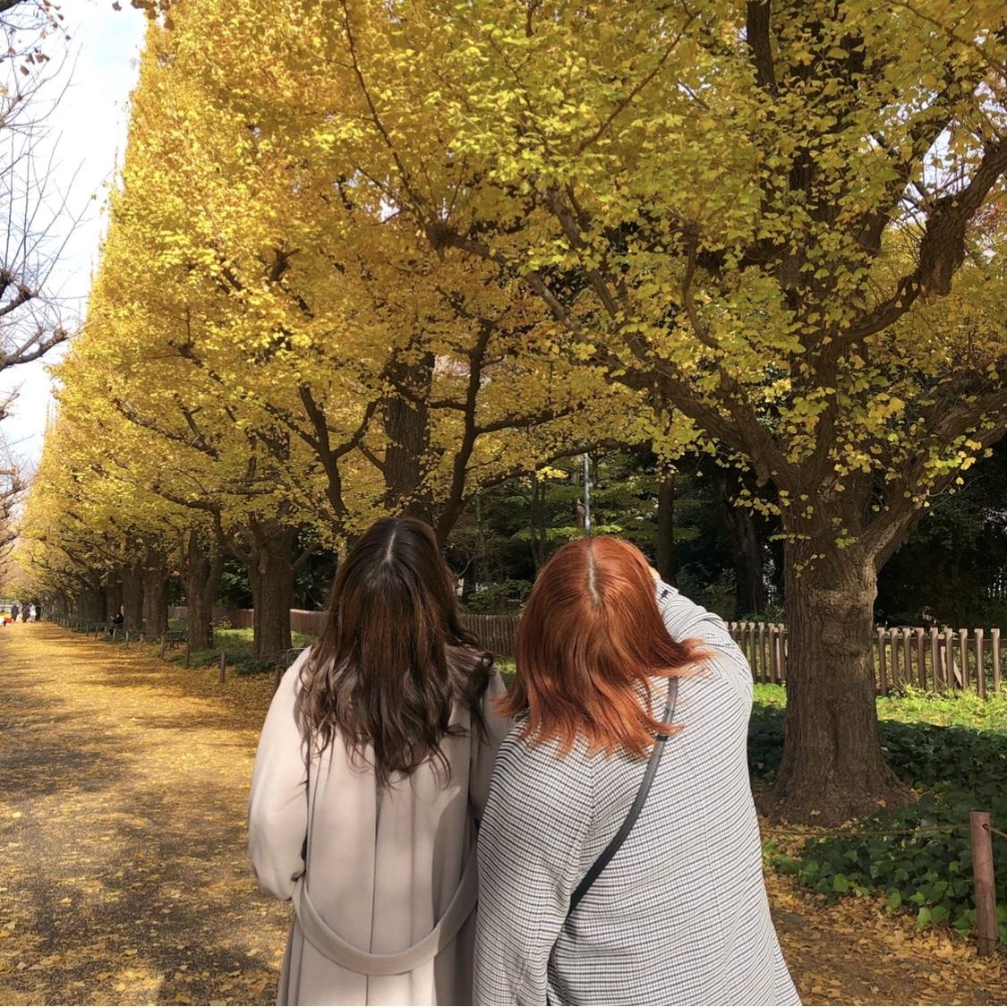 【外苑前】銀杏並木を見てきました!_1_2