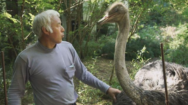 松村直登さんと震災後に迷子になっていたダチョウ