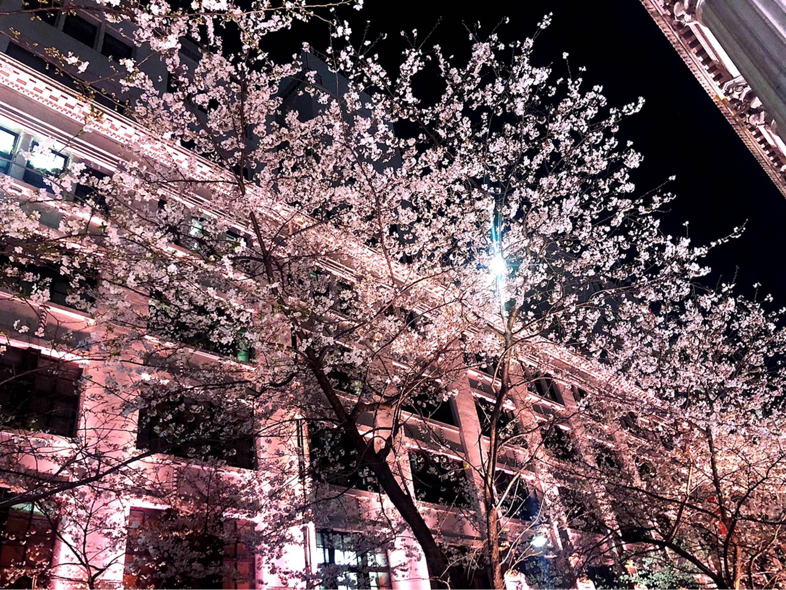 "Vol.81♡ ピンク色のライトアップがカワイイ!""日本橋・桜フェスティバル""_1_2"