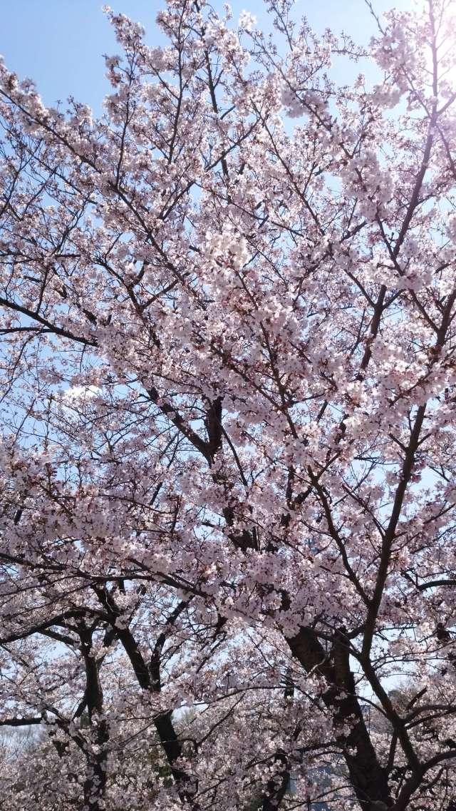 桜の綺麗なこの季節は_1_8