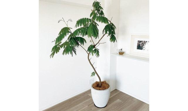 植物と心地良く暮らす。【40代 私の暮らし】_1_3