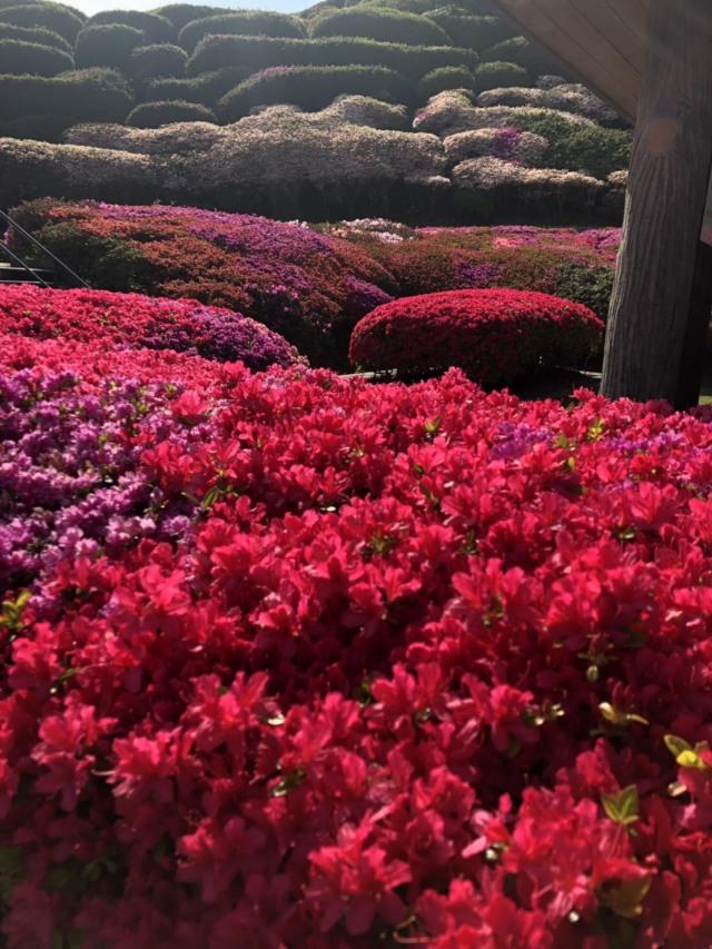 春〜初夏の花々_1_3