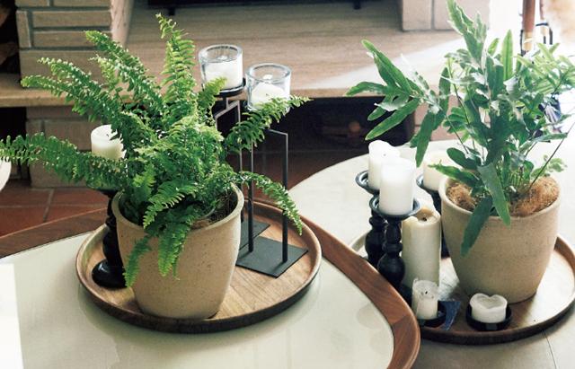 キャンドルの灯と植物が合う家