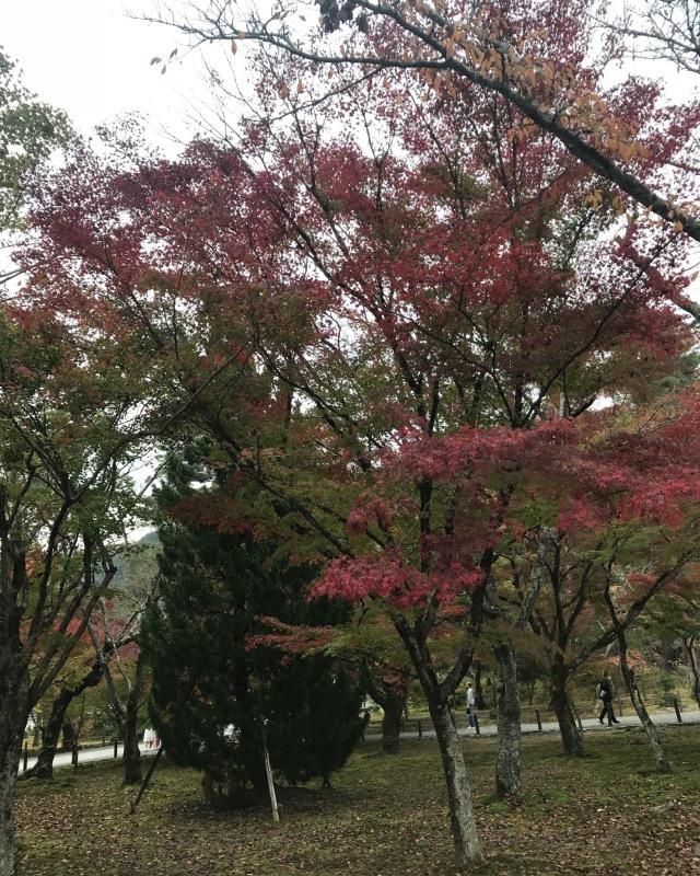 ゆき散歩。京都の紅葉と言えば南禅寺。15年ぶりに行ってきました!_1_4-1