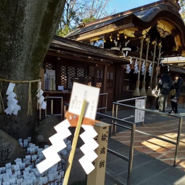 【京都おすすめスポット】亥年の参拝にぴったりの神社_1_4-1