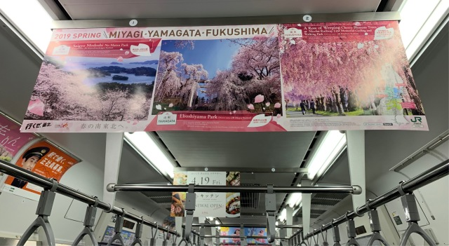 桜前線北上中_1_2