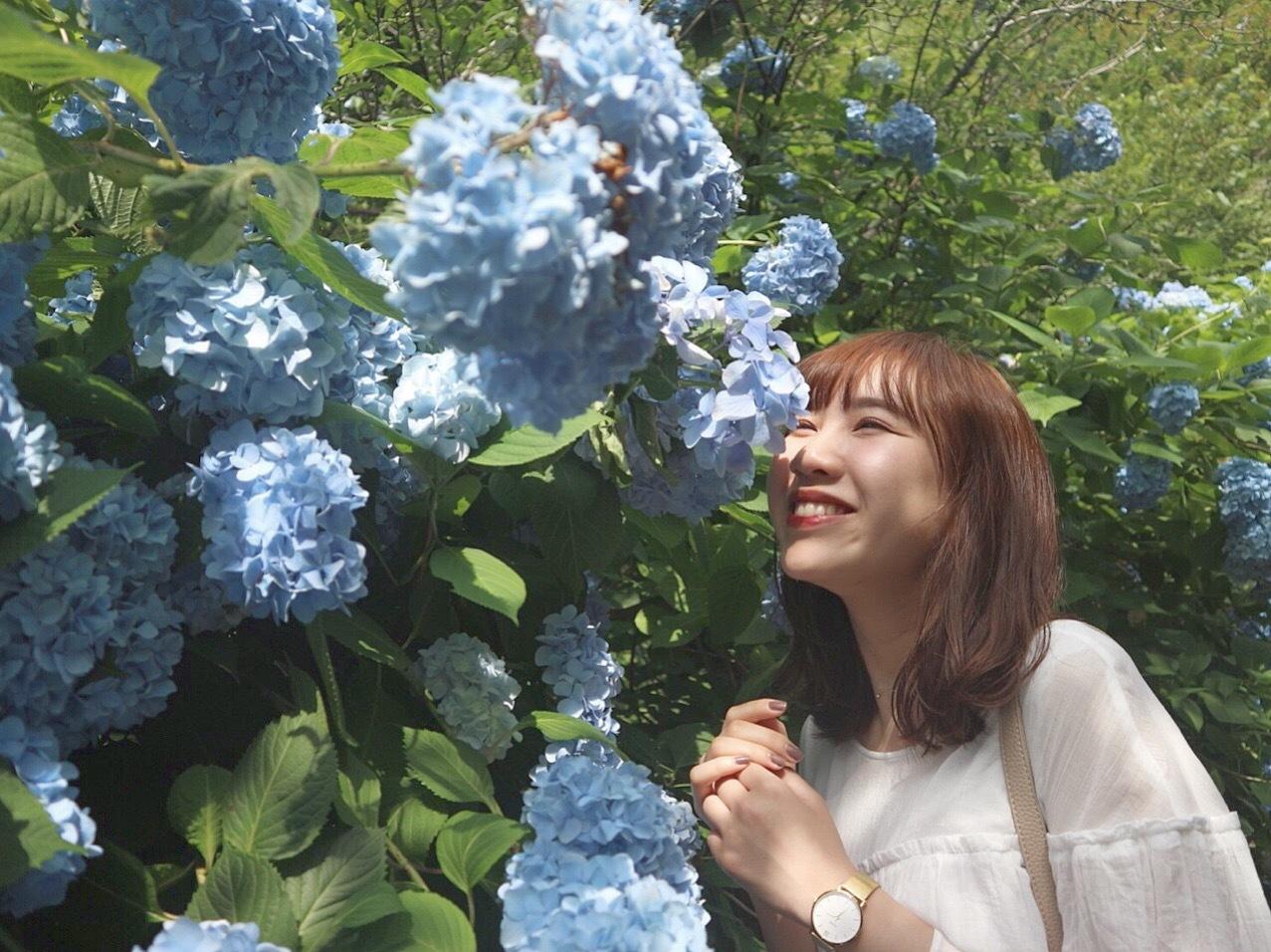 オススメ紫陽花スポット ⸌◦̈⃝⸍❁⃘_1_2