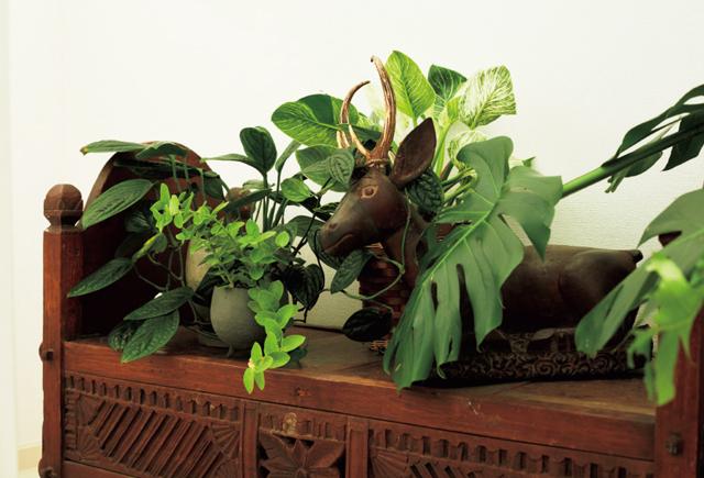 趣のあるアンティークの置き物と観葉植物を一緒に飾るのもおすすめ