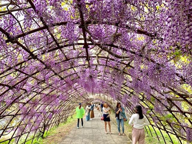 ☆「令和」元年☆藤の花のお花見でスタート!_1_2
