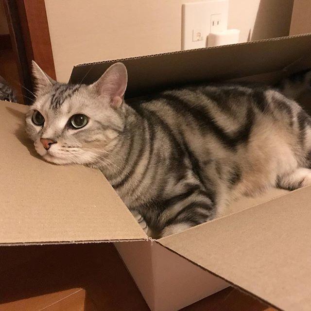 箱、LOVE!_1_1