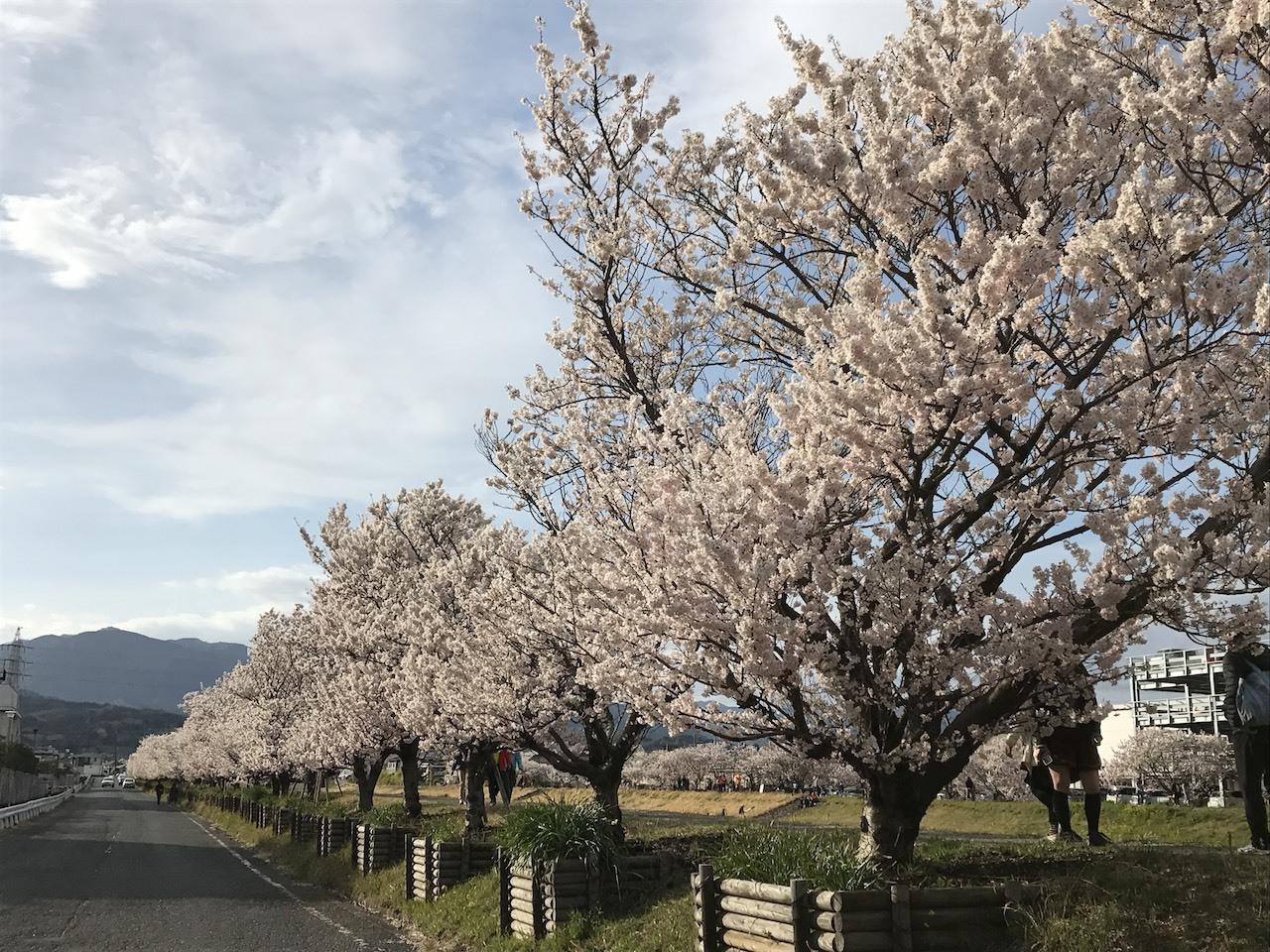 ハーブティー花粉対策ブレンド&春だからこそ感じる『人生の扉』_1_4