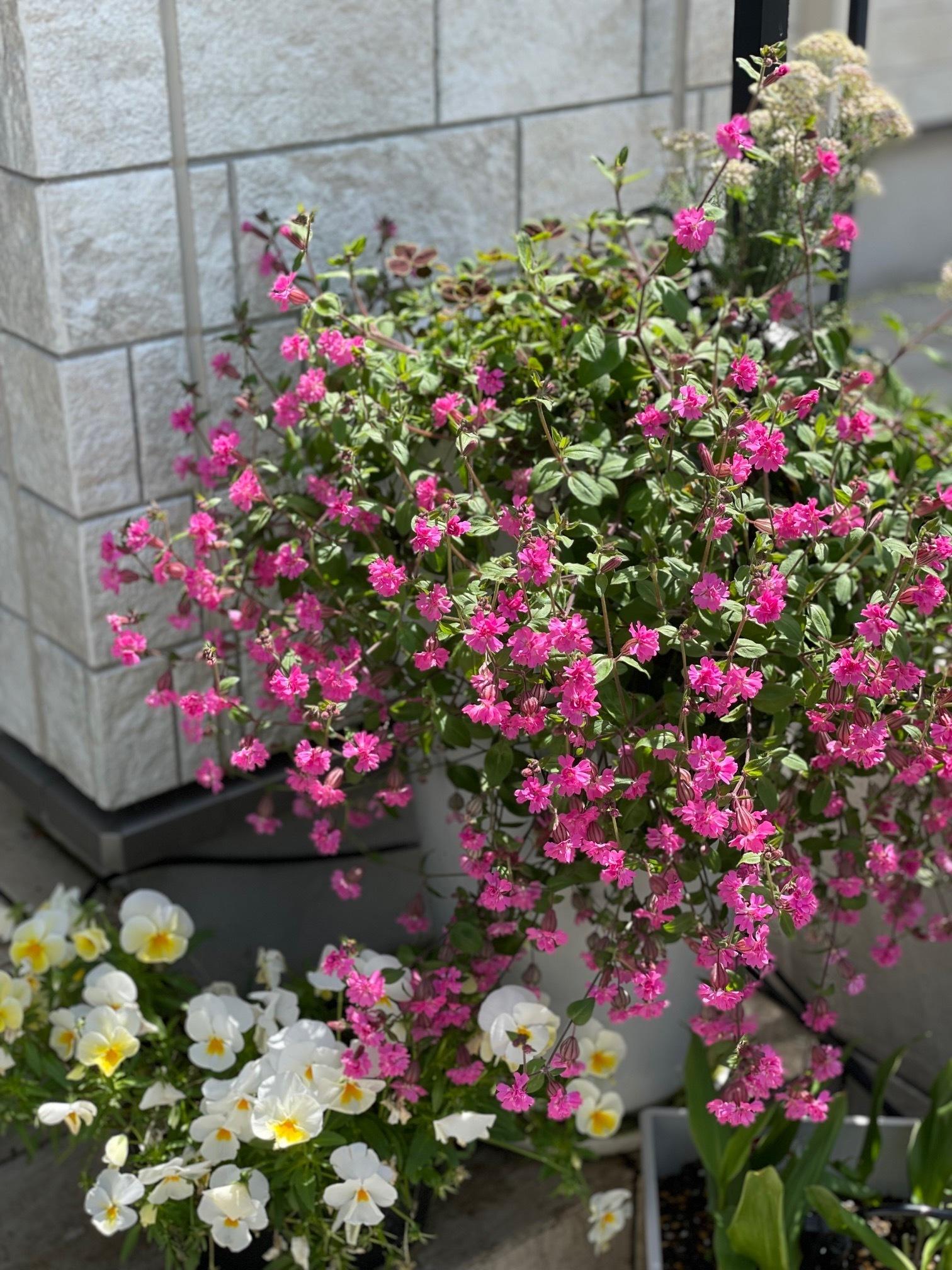 チームJマダム インテリア お花のある暮らし