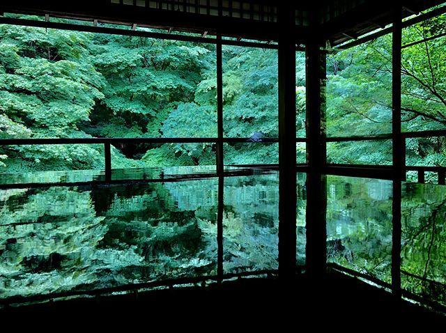 6月の京都。青紅葉、苔庭、紫陽花。_1_1