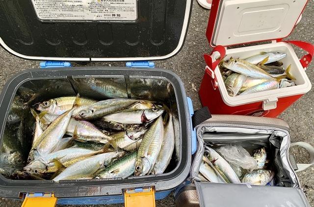 この日の釣果は、10人×4時間で70匹!
