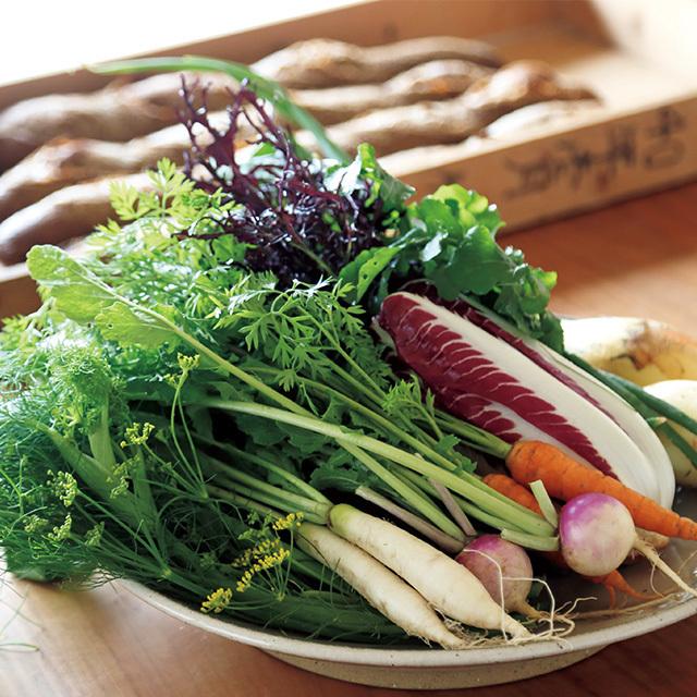 島の生産者が手がけたイタリア野菜は、どれも新鮮で美しい