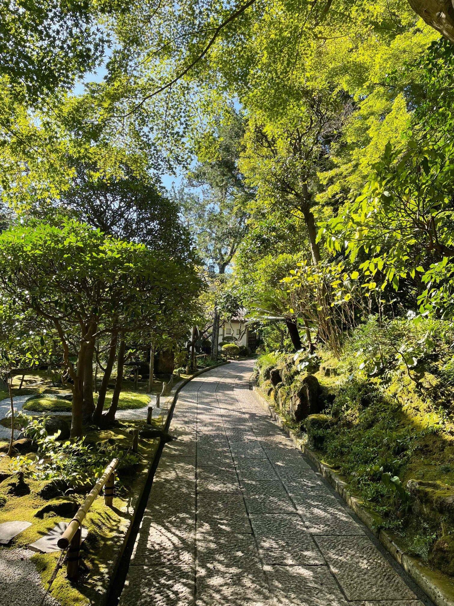 運動を兼ねて、いざ鎌倉報国寺へ_1_4