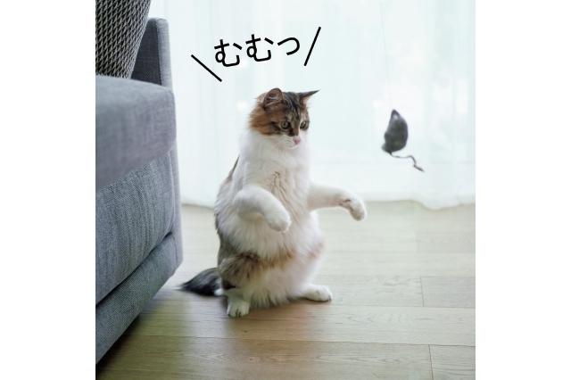 撮影隊の手みやげの猫じゃらしを前に、堂々のお座り