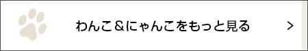 はじめまして! のおすましショット【わんこLIFE ポール&ケイト #1】_1_3
