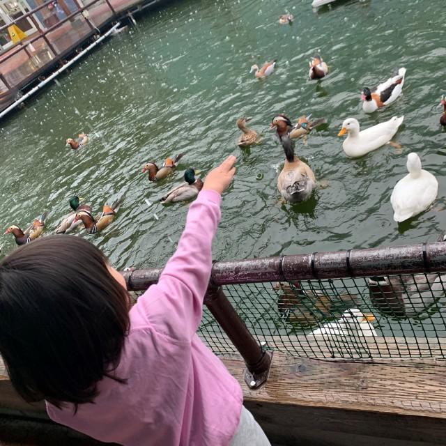 動物とのふれあい旅① ~子供が大喜びの鳥の楽園へ~_1_3-1