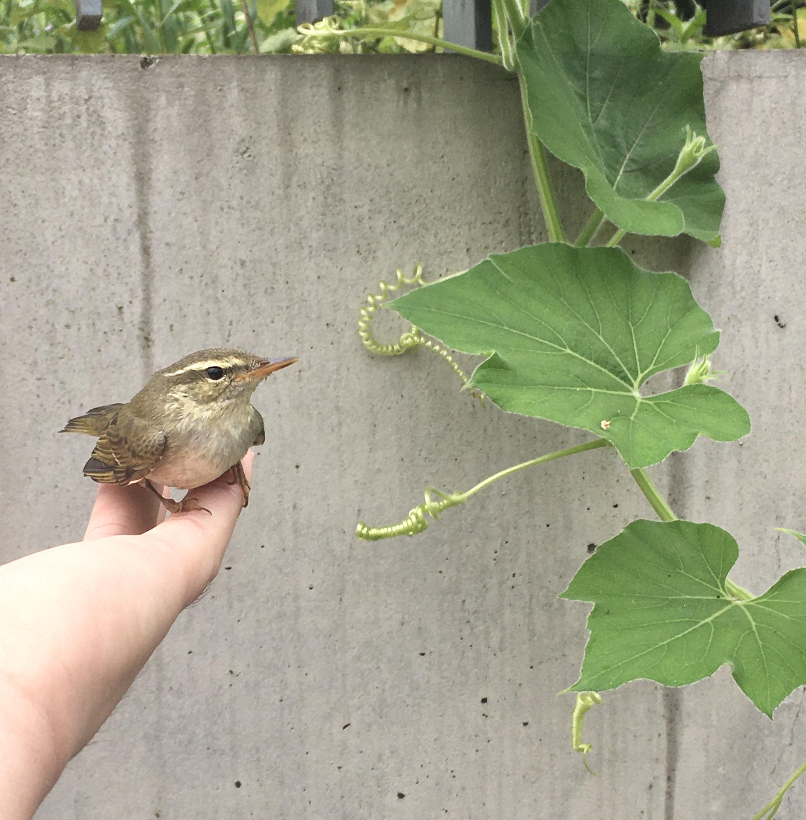 小鳥を拾った日。_1_1