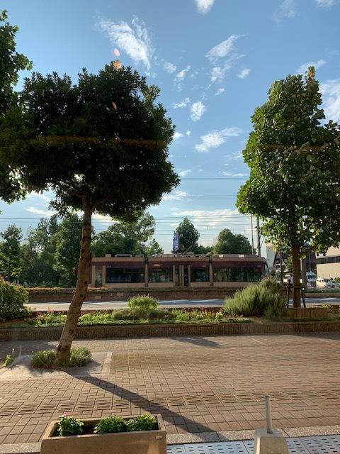 夏のウオーキング 懐かしの浜寺公園へ・・・_1_4