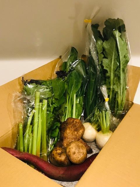 長野県佐久市にある、「藤井農園」から年間契約でお取り寄せしています。 先日届いたばかりの段ボールの中身は、ルバーブ、にら、小松菜、株、サツマイモ、越冬イモ類など