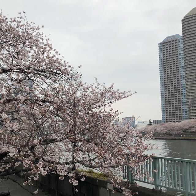 桜と小バラと手作りマスク。_1_1