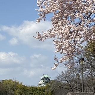 桜かと思いきや_1_1