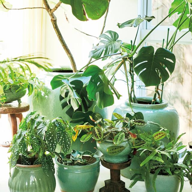 タイや中国のセラドン焼の器に植物を