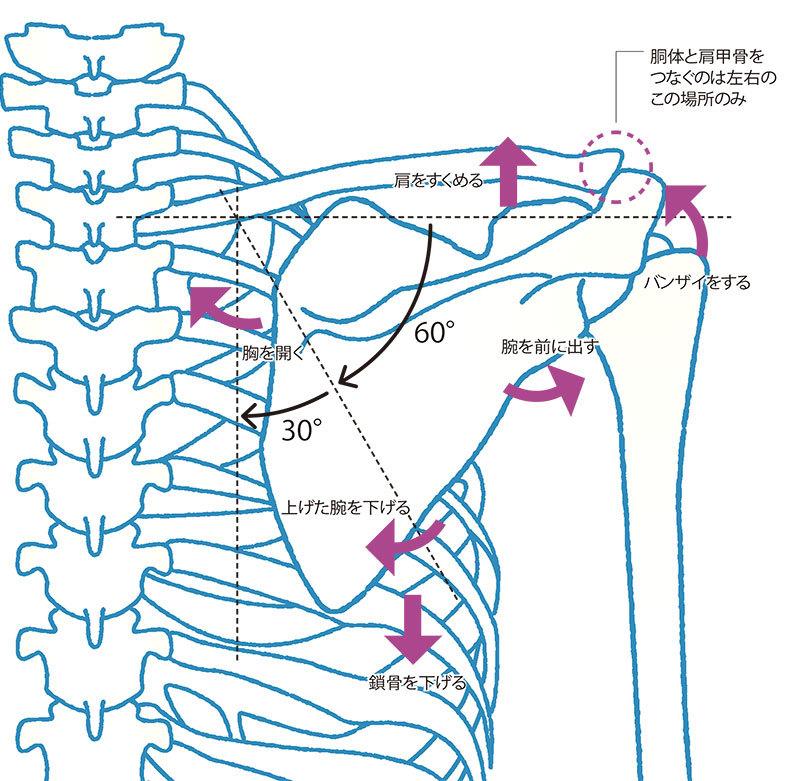 肩 甲骨 を 動かす