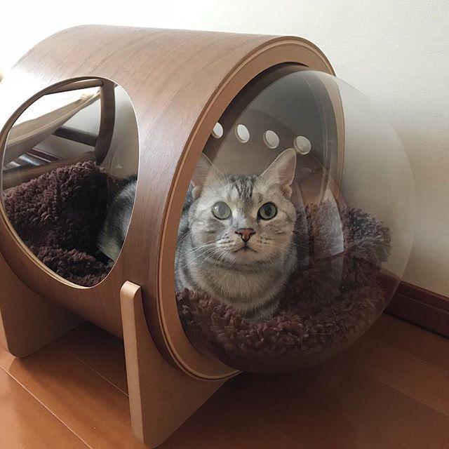 宇宙猫?_1_1