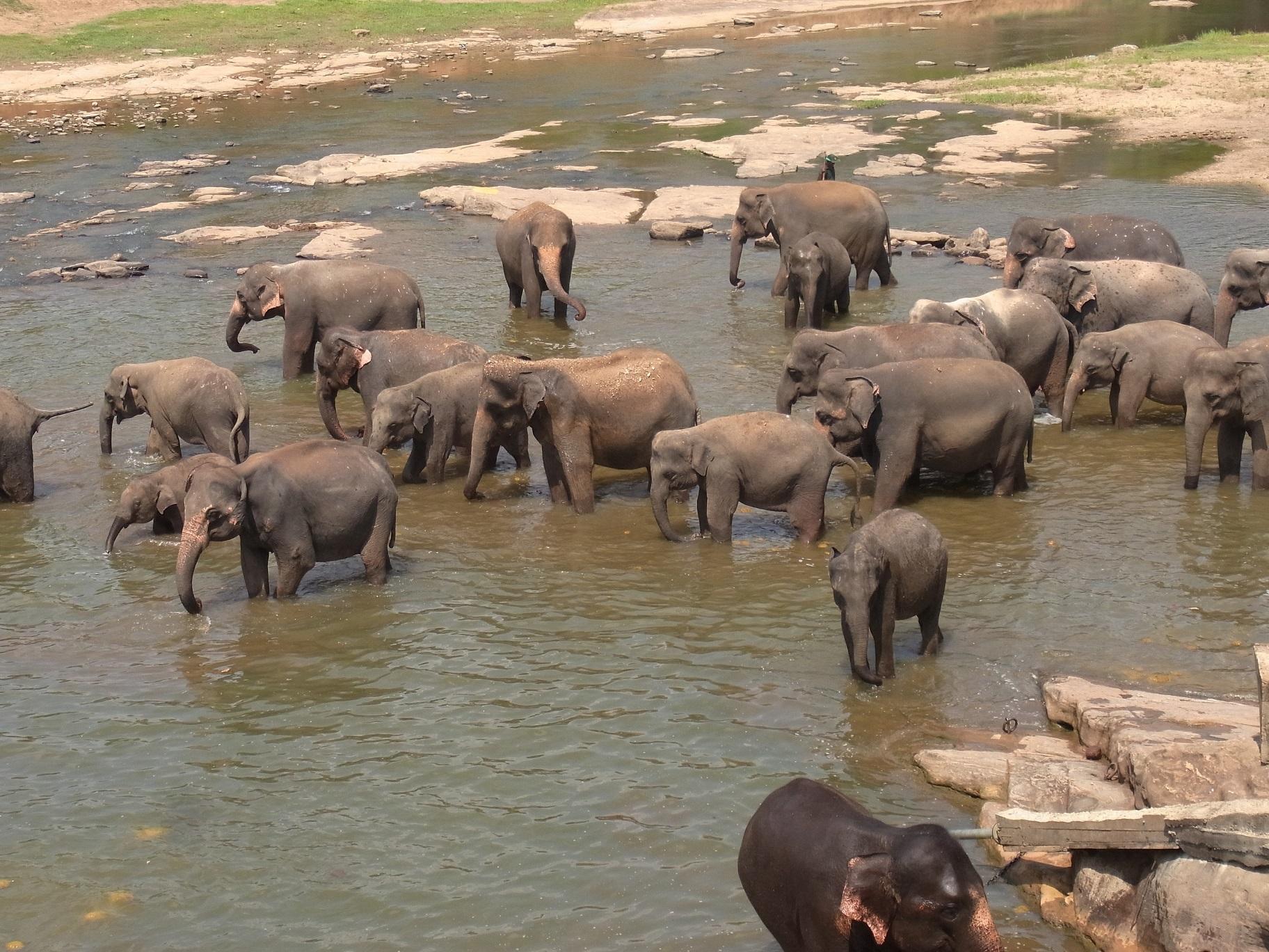 ピンナワラの象の孤児院@スリランカ_1_6