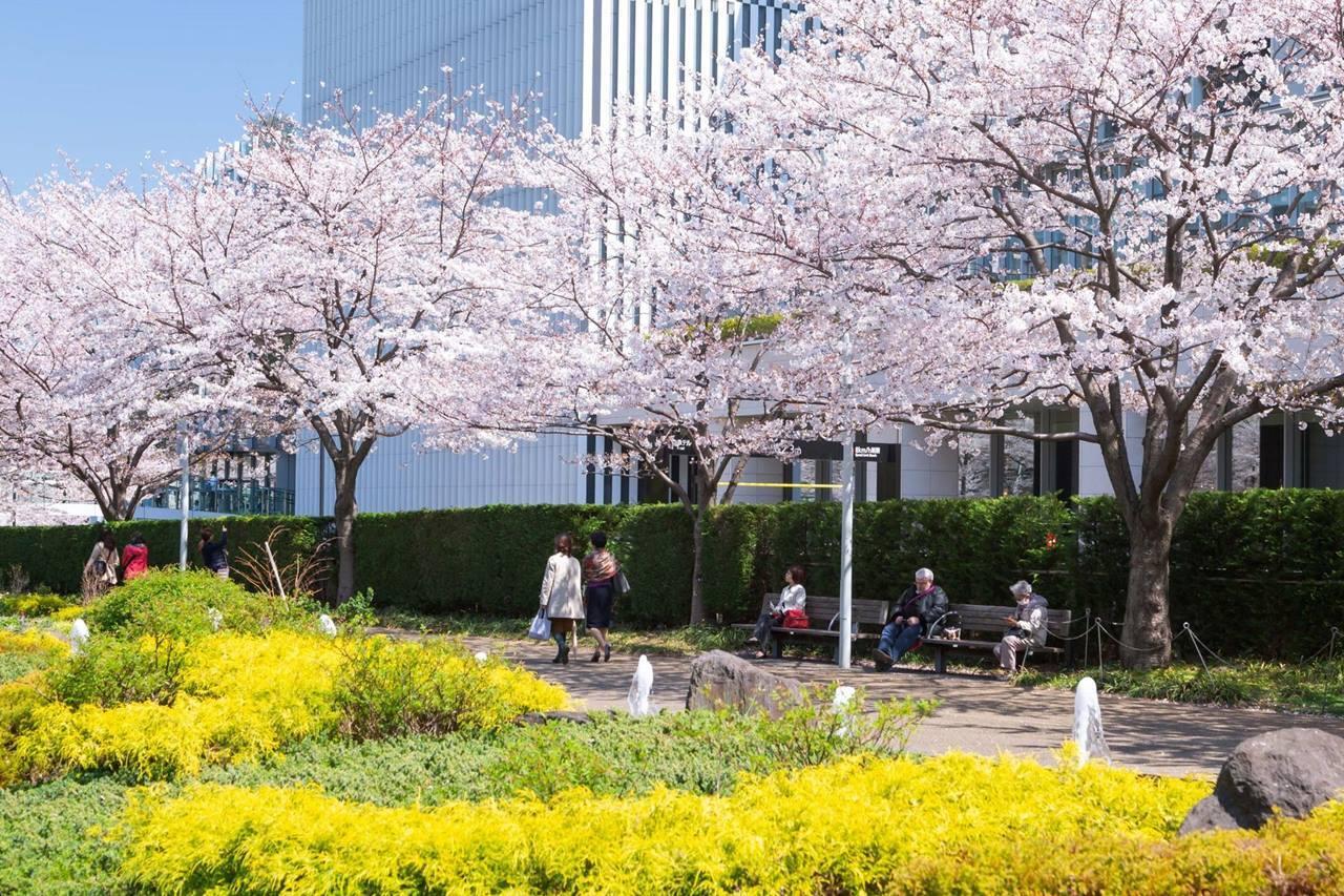 東京ミッドタウン春の散歩道