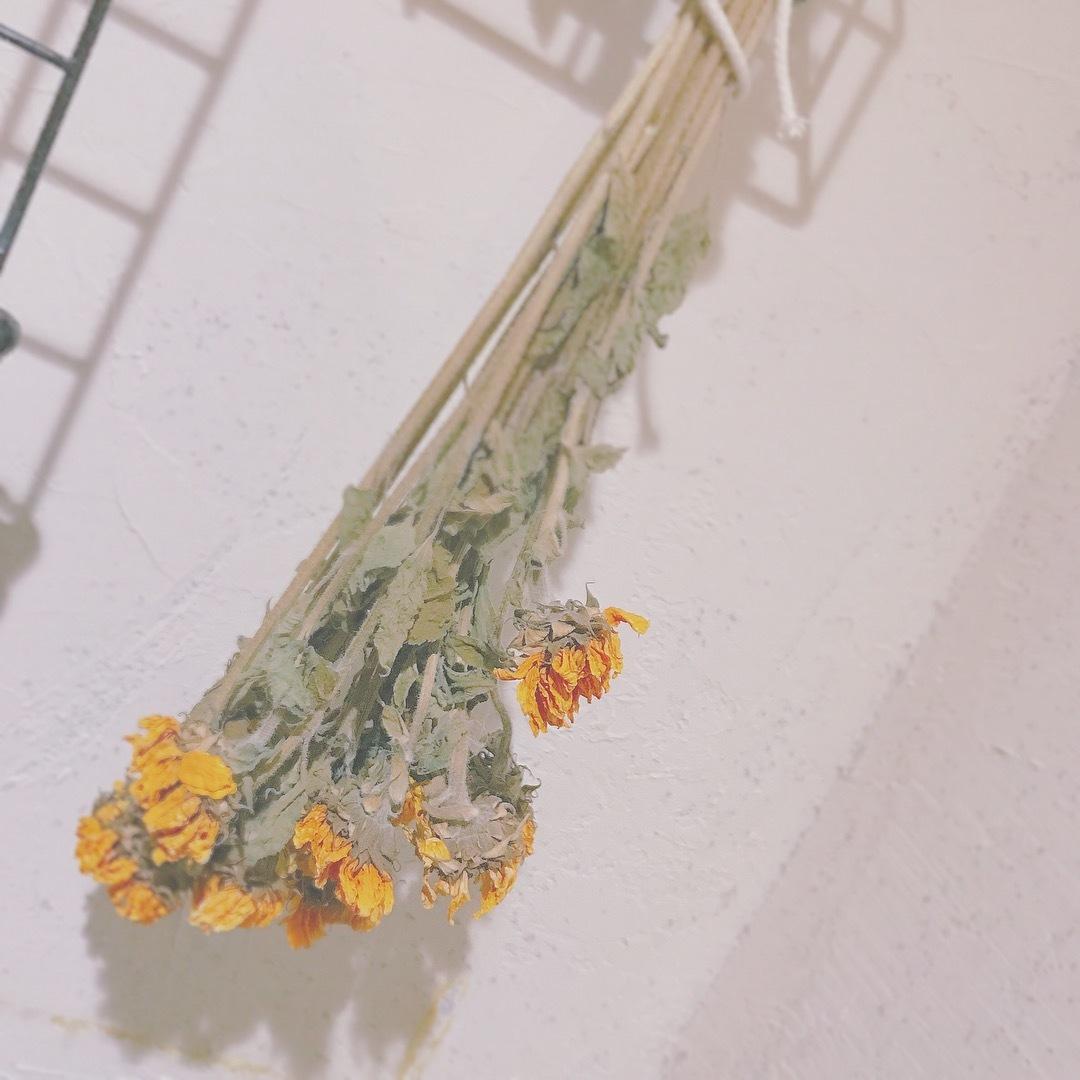 ☃︎フォトジェニック♡新宿御苑MIRIitoncafe☃︎_1_9