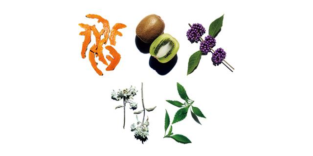 肌の可能性を高める 選びぬかれた21種の植物