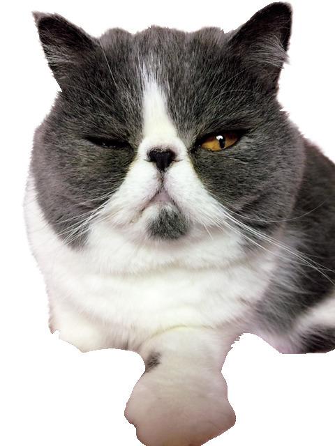 エクラにゃんスタ大賞を受賞した、癒しの猫写真五選_1_1