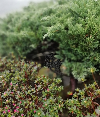 植物に張った蜘蛛の巣②