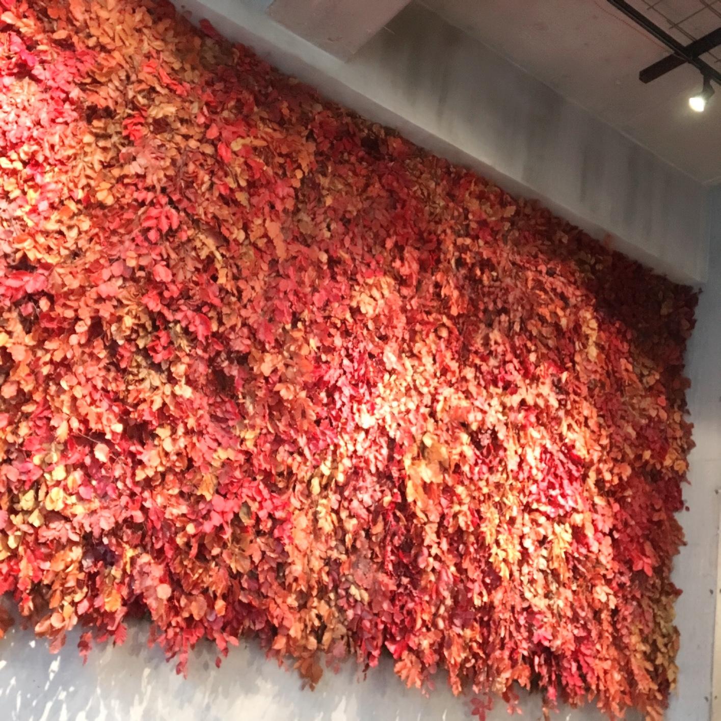 お花に囲まれたカフェ《ニコライバーグマン ノム》_1_1