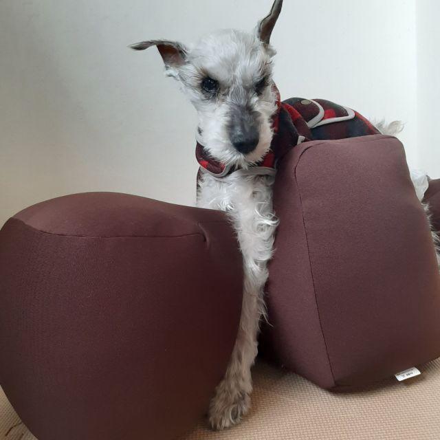 犬用介護用品 リラクッション