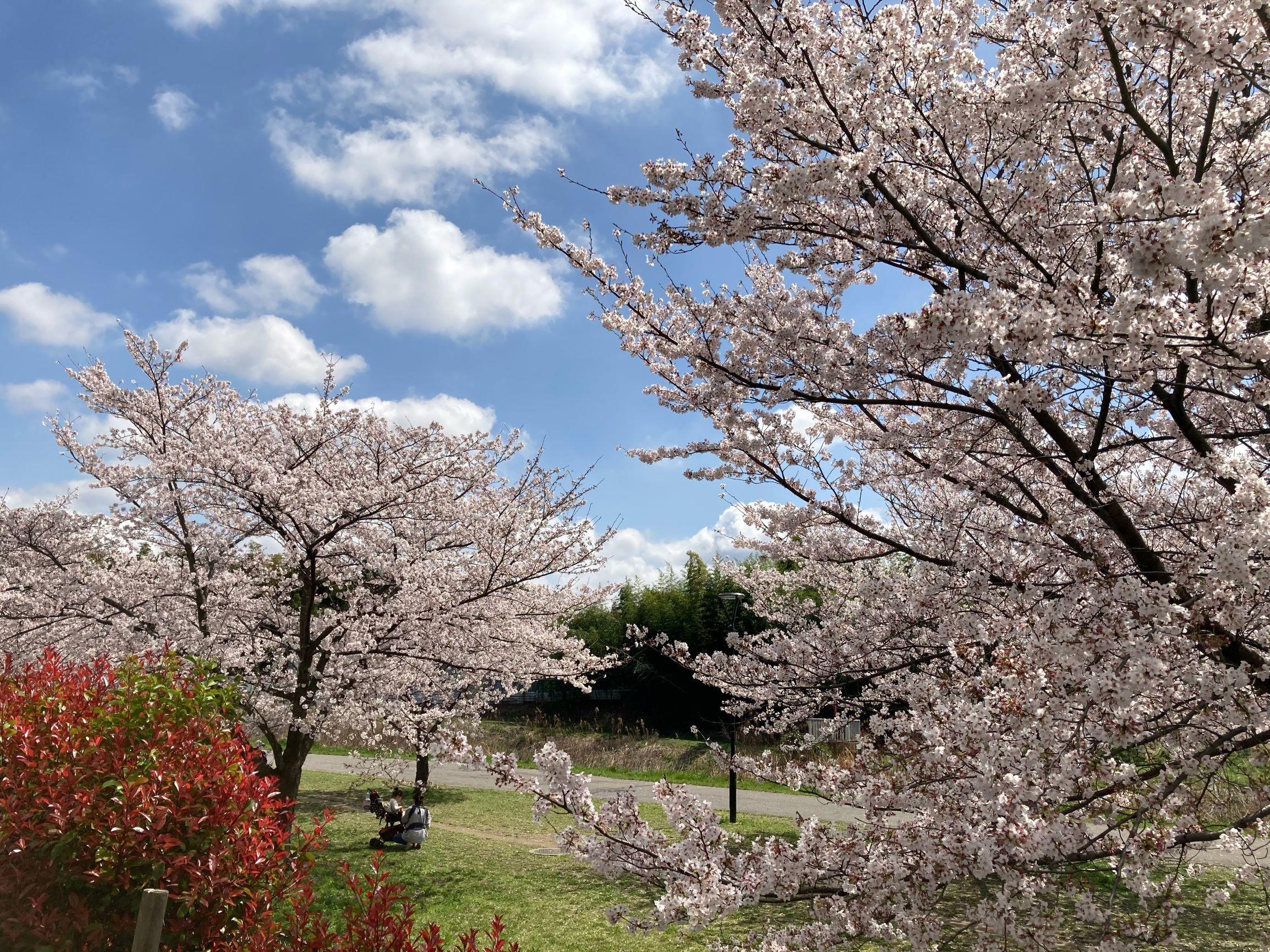 春の揺れスカート_1_5