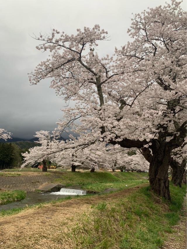 福島県でおすすめの『桜の名所』②_1_3