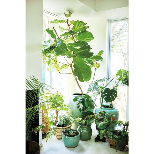 大きな植物の下には中・小の植物を高低差をつけて