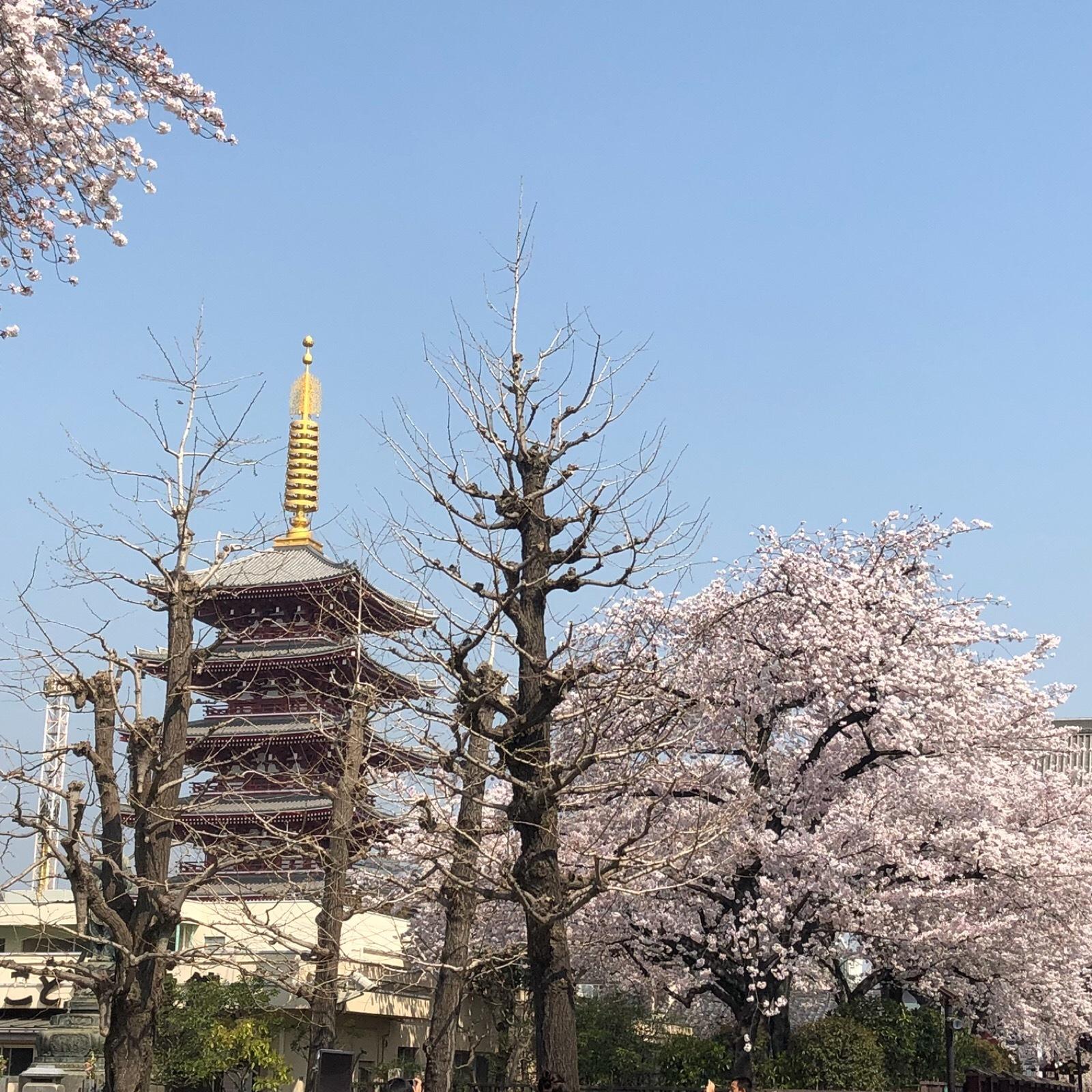 春の浅草_1_1
