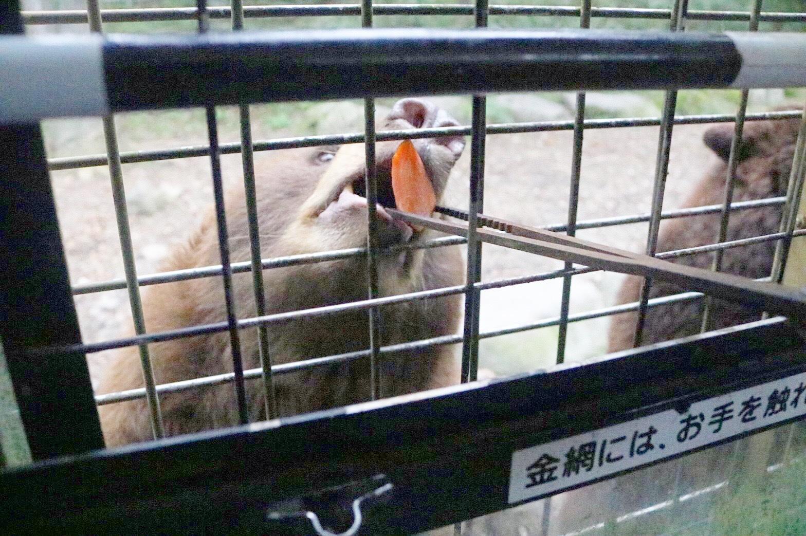 都民は入場料が無料に!富士サファリパークに行ってきました♡_1_3-2