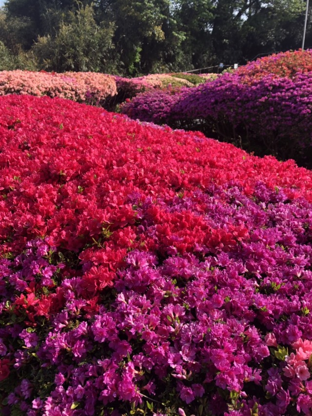 春〜初夏の花々_1_2