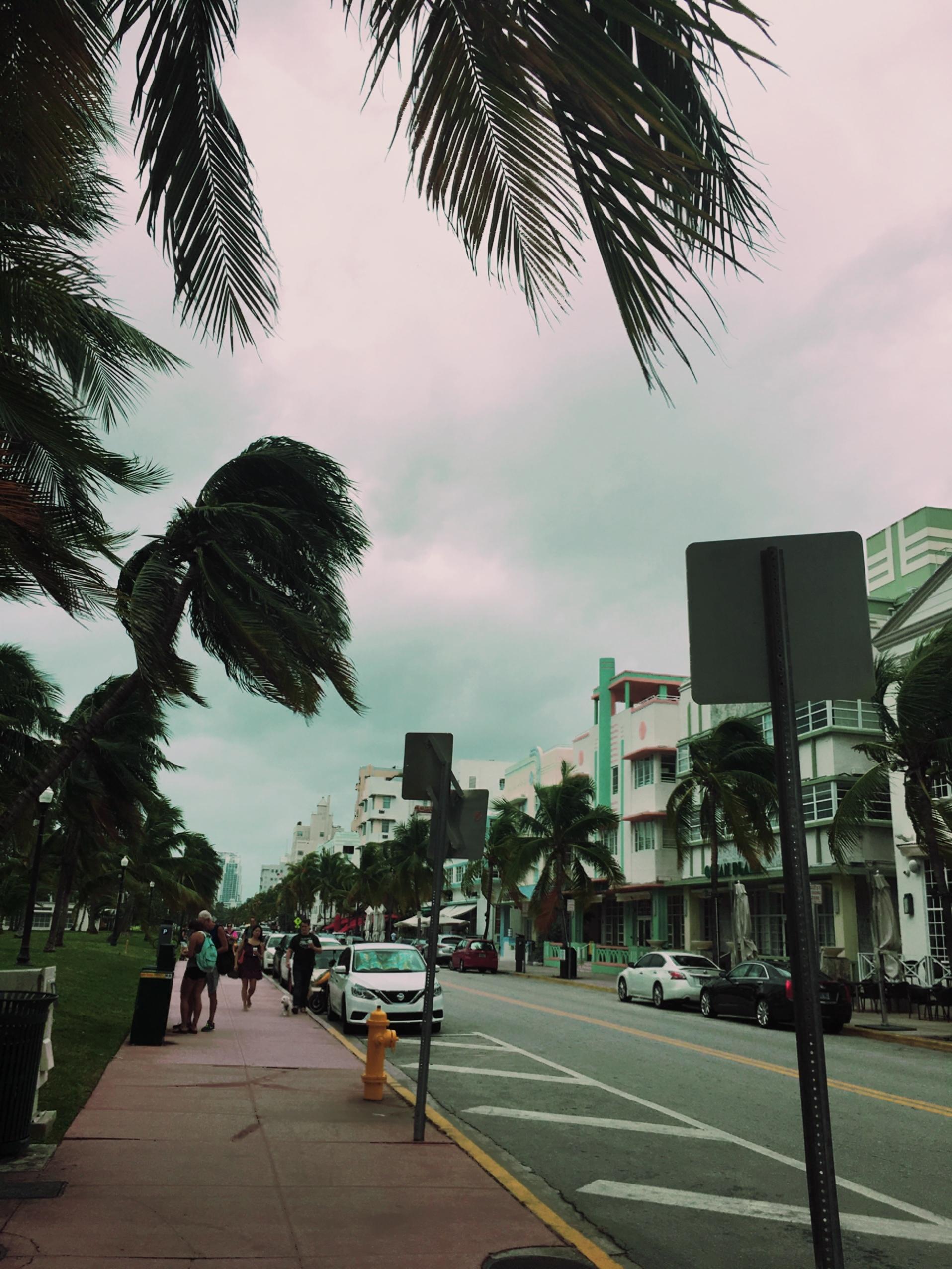 マイアミビーチにて。_1_8